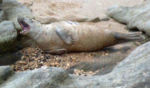 Seal pup 3